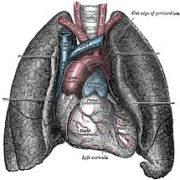magán kardiológia Székesfehérvár